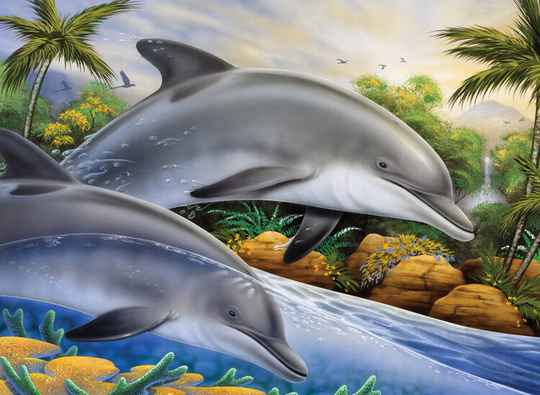 Painting by numbers DOLPHIN ISLAND